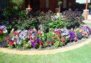 Как ухаживать за цветочными растениями в вашем саду
