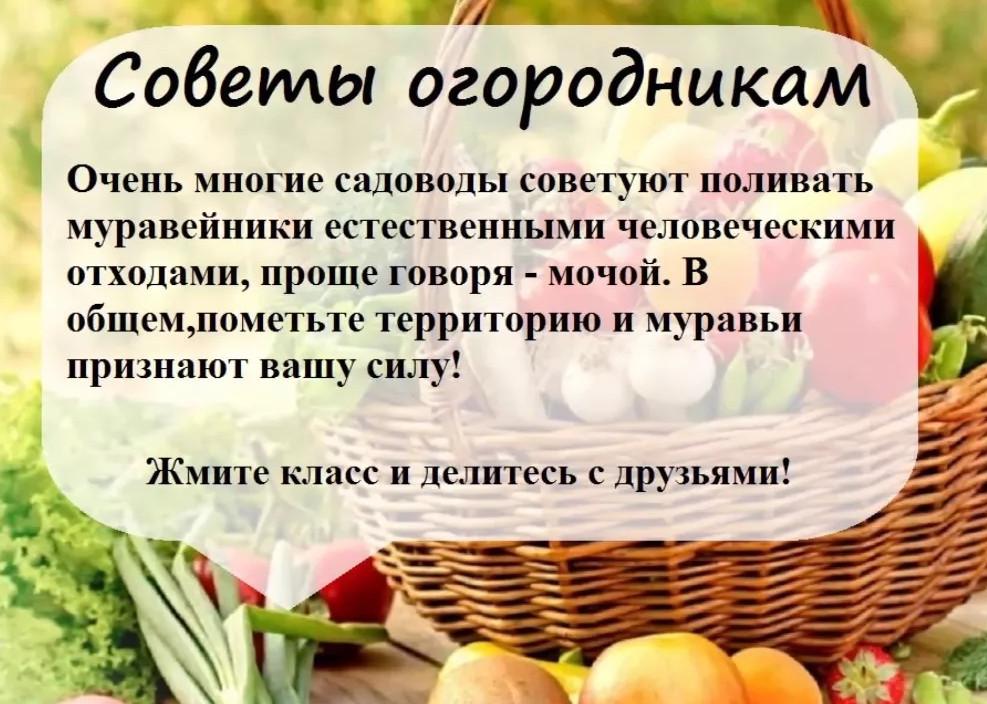 Торты и пирожные в советское время фото ложечку
