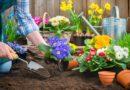 Как подготовиться к весеннему посеву на даче