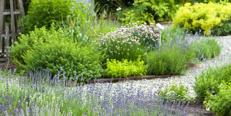 20 многолетних трав для самого вкусного съедобного сада когда-либо