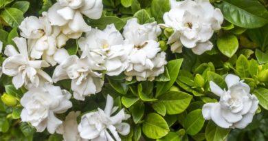 15 Ароматных Растений, Которые Сделают Ваш Сад Удивительным Запахом