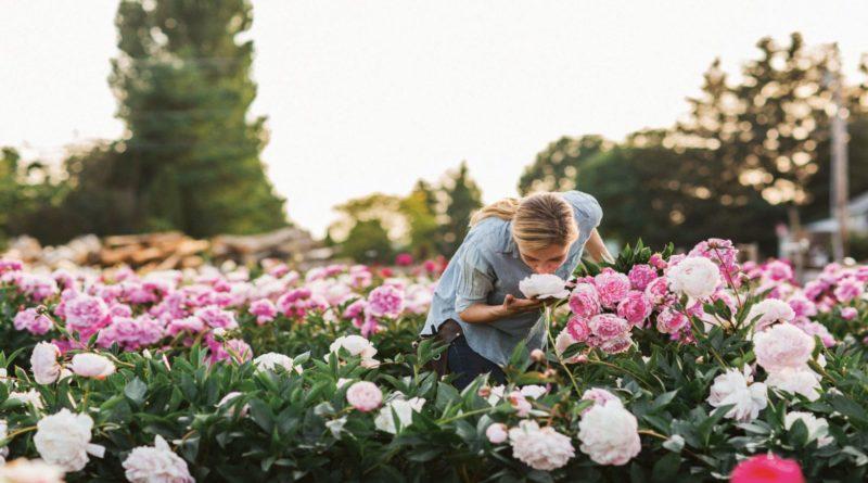 Как правильно выращивать и ухаживать за пионами
