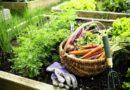 Полное собрание дачных хитростей для садоводов!
