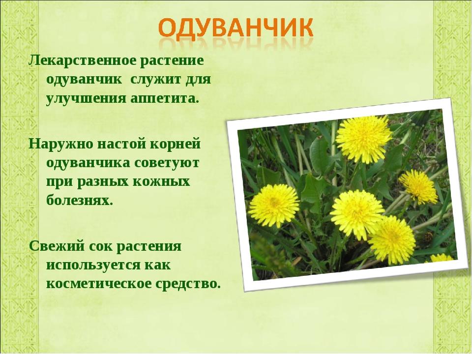 Одуванчик фото и описание для детей