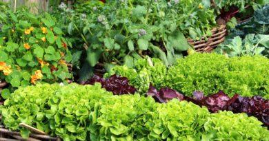 Лучшие овощи и цветы сажать в сентябре